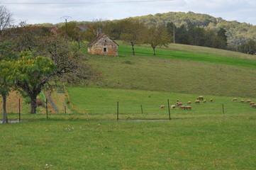 pâturage moutons dans campagne