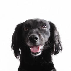 Cane sorridente isolato su bianco