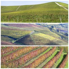 Vineyards on the hills of Langhe in Piedmont, Italy