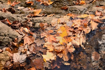 Leaves in the Water