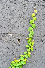 wall and green leaf background