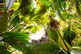 Tropical rain forest in Valle de Mai, Praslin, Seychelles - 72131143