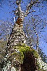 Funghi in Val di Mello 07