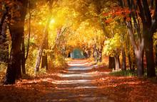 """Постер, картина, фотообои """"Alley in the autumn park"""""""