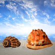 canvas print picture - Sea shells on beach in the sunset