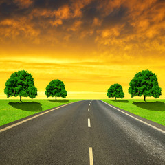 Asphalted road with trees in the sunset