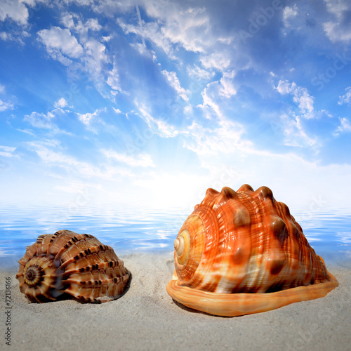 canvas print picture Sea shells on beach in the sunset