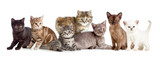 different kitten or cats group - Fine Art prints