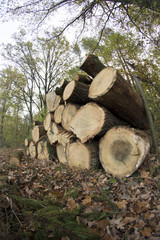 leśny skład drewna