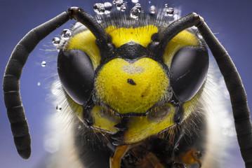 Arııı