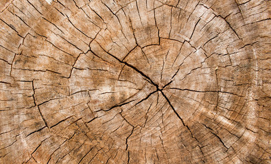 Wooden texture of a tree trunk,Background texture.