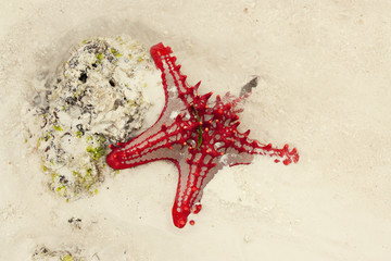 Stella marina in spiaggia