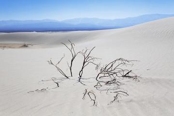 Dunes Taton, Catamarca, Argentina
