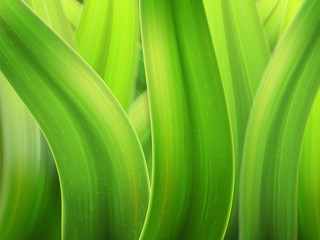 grass macro background