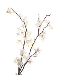 Artificial white sakura flower isolated
