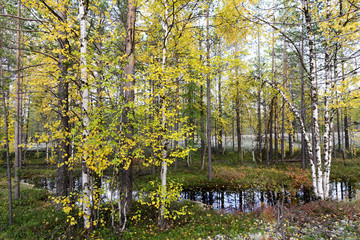 autumn landscape Russian forest tundra