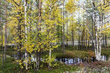 autumn landscape Russian forest tundra