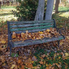 Fall Leaves on Bench