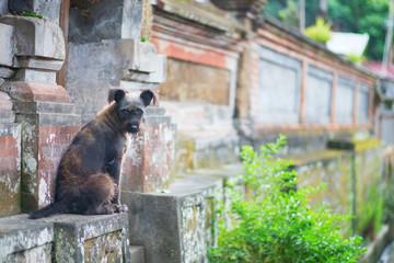 Stray dog on a street of Ubud, Bali