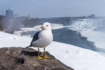 Möwe an den Niagarafällen