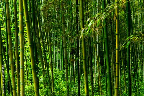 Tuinposter Bamboe Phyllostachys bambusoides, Poaceae, edible, Japan