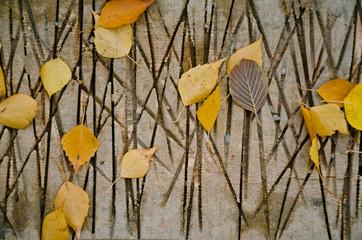 листья на порезаной доске