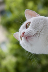 white cat on a background of green foliage