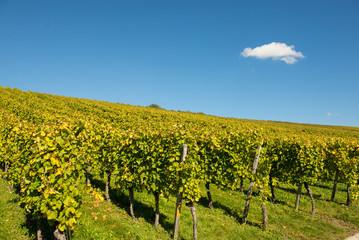 Wolke mit blauem Himmel über einem Weinberg