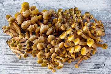 Detail of mushrooms 'Armillaria mellea' on a table