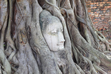 head of buddha in tree