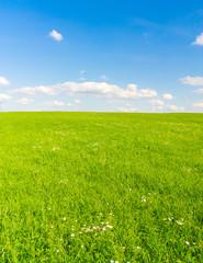 Grass Scene Dream