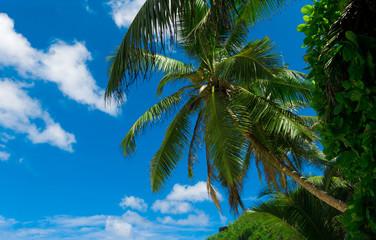 Plants Leaves Palms