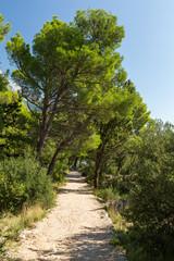Forêt méditerrannéenne