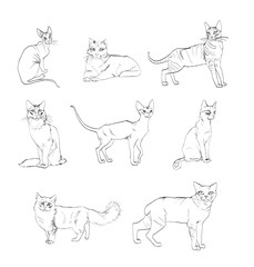 pictures of cat breeds in the vector