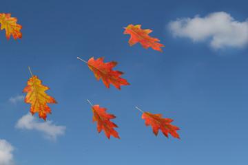 Blätter am Himmel