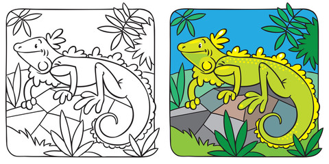 Little iguana coloring book
