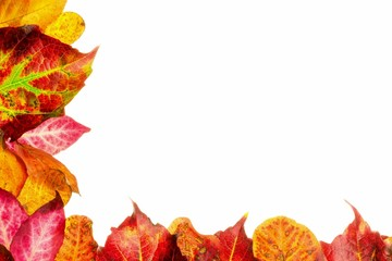 Autumn fall leaves with copy space on a white background