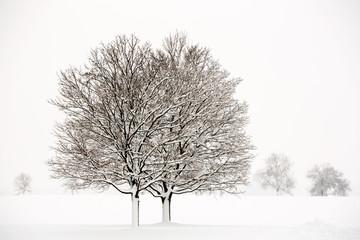 Pair of trees