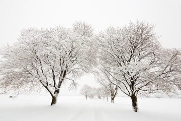 Tree lined road covered in snow