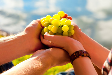 white grapes in the hand, sunlight