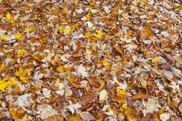 Autumn foliage, Vermont USA