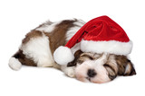 Cute sleeping Havanese puppy dog is dreaming about Christmas - Fine Art prints
