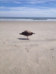 a young seagull standing in tha sand on the beach