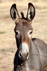 Funny donkey looking at camera