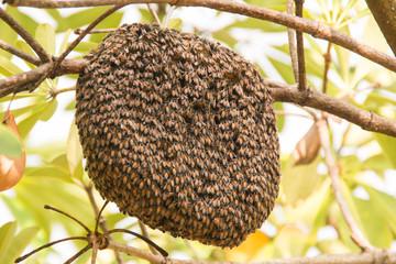 Beehive on tree