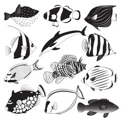 Marine Fish Collection
