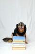 Reading Dog