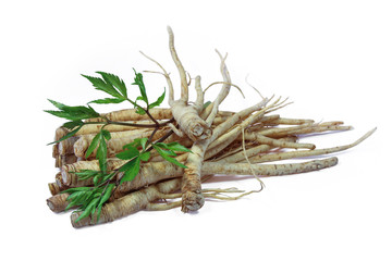 Fresh Ginseng Root on white background