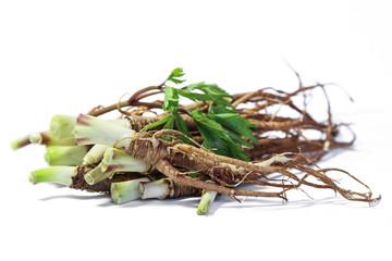 Fresh Dong Quai root, Chinese  herbal medicine.