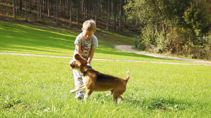 Blonde Boy plays with his beagle Dog friend